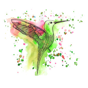 Hummingbird Apple