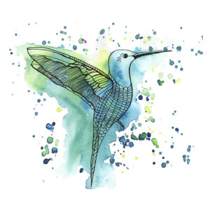 Hummingbird Aqua