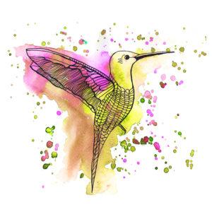Hummingbird Mango