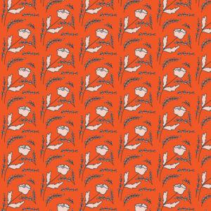 Karoo Tangerine
